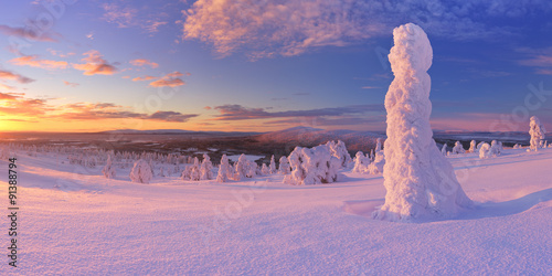 Photographie  Sunset over frozen trees on a mountain, Levi, Finnish Lapland