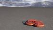 Flip-flops on the beach