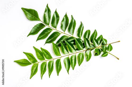 Photo  Curry leaves - karapincha (Murraya koenigii)
