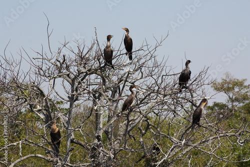 Fotografie, Obraz  anhinga tree