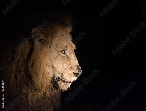 Fotobehang Leeuw Lion at night