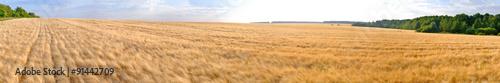 Foto auf Gartenposter Landschappen wheat field panorama