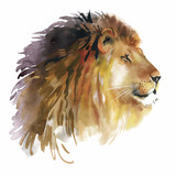 Watercolor lion on a white background vector - 91450304