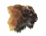Watercolor european bison animal isolated on white background - 91451121