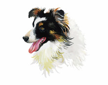 Border Collie Animal Dog Water...