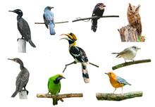 Set Of Birds On White Background, Hornbill, Boardbill, Owl And Other Birds