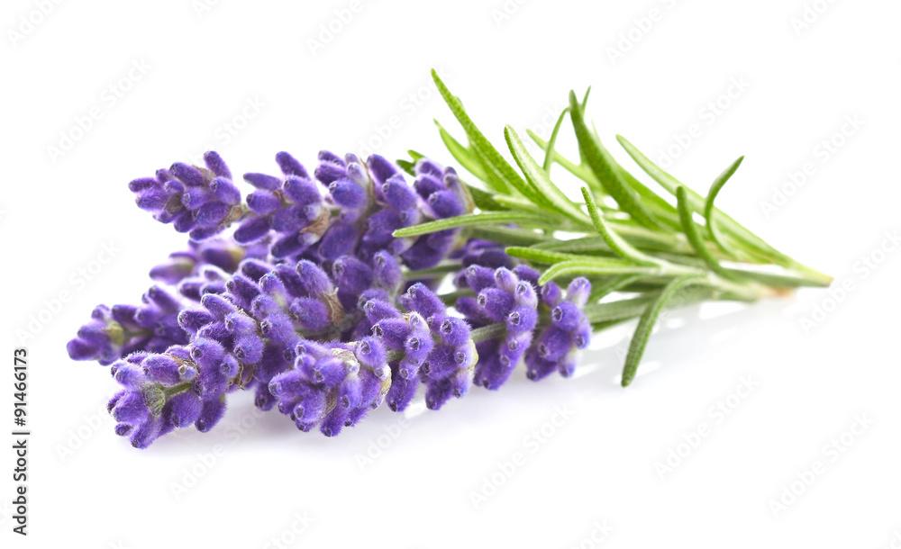 Fototapety, obrazy: Lavender flowers