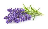 Fototapeta Kwiaty - Lavender flowers