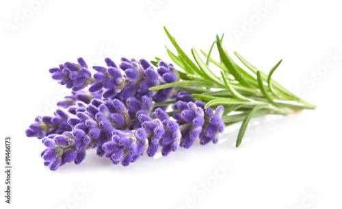 Lavender flowers Wallpaper Mural