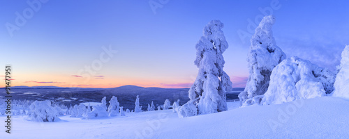 Sunset over frozen trees on a mountain, Levi, Finnish Lapland Poster Mural XXL