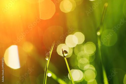 Morning grass - 91478172