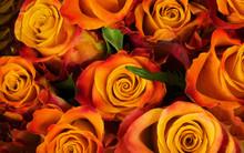 Orange Roses Bouquet Background