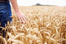 Farmer Walking Through Field C...
