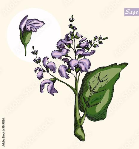 Photo  Sage color