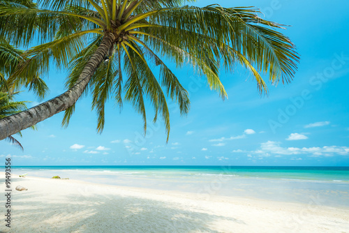 Staande foto Strand Beautiful coconut palm tree at the tropical beach , Thailand
