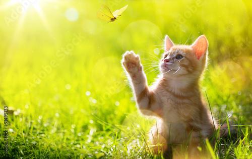 Fototapeta art Young cat / kitten hunting a butterfly with Back Lit obraz