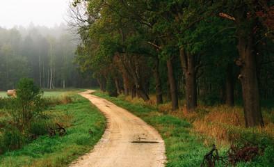 FototapetaThe road near the forest