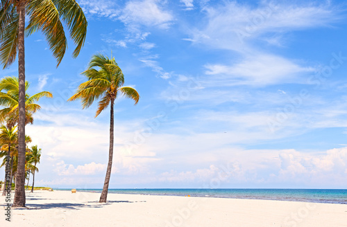 Photo  Palm trees on a beautiful sunny summer afternoon in Hollywood Beach near Miami F