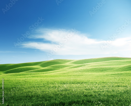 perfect field of spring grass Wall mural