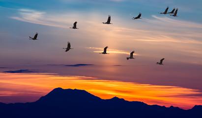 Plakat Migratory Birds Flying at Sunset