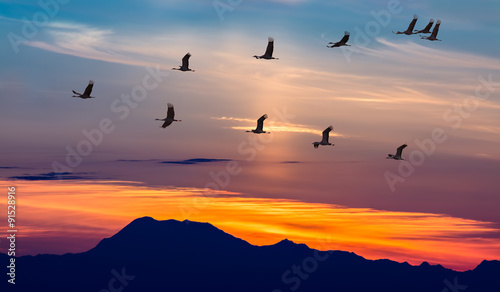 Poster Vogel Migratory Birds Flying at Sunset