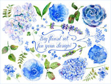 Set Of Different Blue, Cyan Hydrangea, Lavender, Currant For Design. Watercolor Flowers, Leaves. Set Of Floral Elements To Create Compositions.