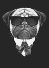 Portrait Of Pug Dog In Suit. H...
