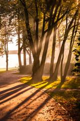 Promienie słońca o pranku w parku
