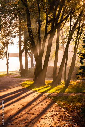 Promienie słońca o pranku w parku - fototapety na wymiar