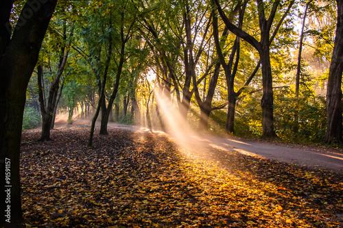 Obraz Jesienne poranne słońce w parku - fototapety do salonu