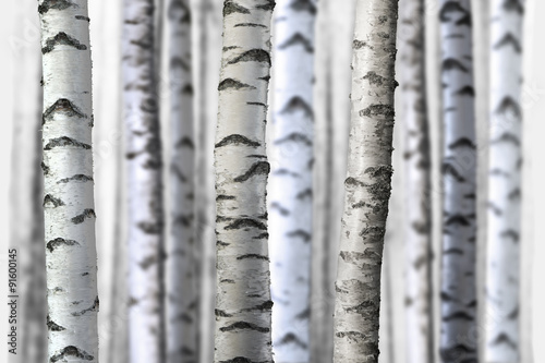Obraz seamless birch trees - fototapety do salonu