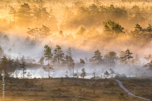Papiers peints Beige Sunrise in the swamp