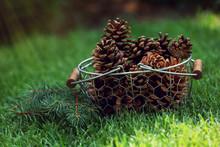 Beautiful Pine Cones In Wicker Basket On Green Grass Background