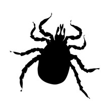 Black Silhouette Of Tick  Vector Illustration Isolated On White Background