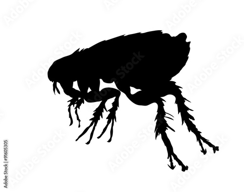 Black silhouette of flea