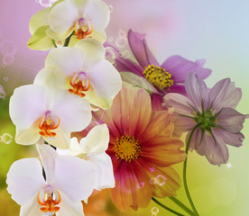 Obraz na Szkle Storczyki Orchid flowers on abstract background