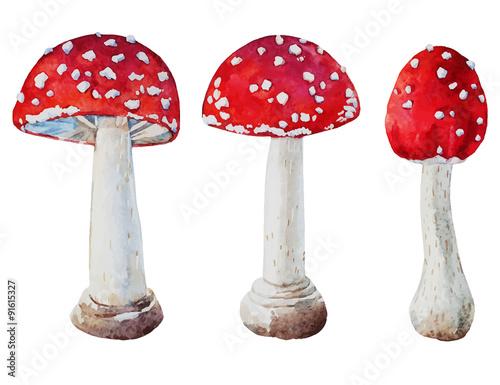 Watercolor vector amanita mushrooms Wallpaper Mural