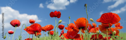 Photo sur Toile Poppy red poppies under sky