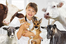 Veterinarian And Animal  In Clinic
