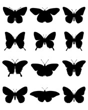 Black Silhouettes Of Butterfli...