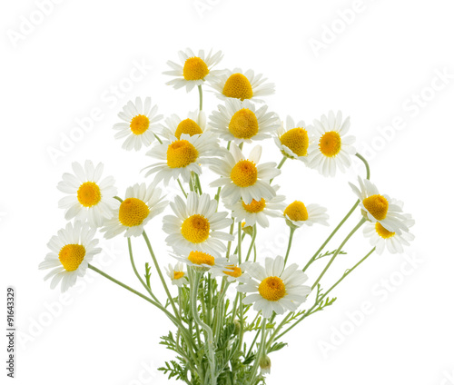 Foto op Canvas Madeliefjes Chamomiles isolated on white background. cutout