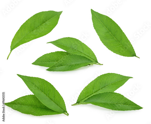 Peach leaves isolated on white background