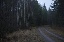 Ödslig Skogsväg