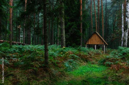Fototapeta Cottage for animals obraz