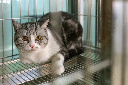 Fotografie, Obraz  cat in a cage