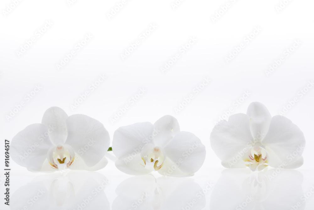 Fototapety, obrazy: White orchids