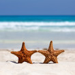 Two starfishes on caribbean sandy beach