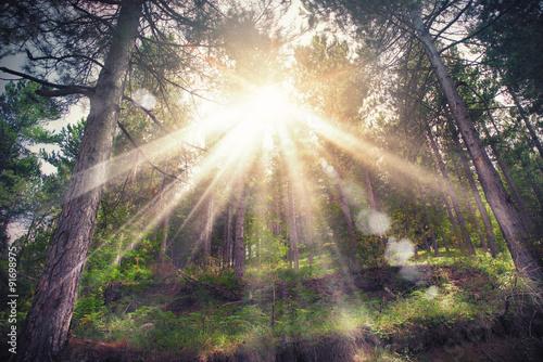 Fényképezés Woods sunlight