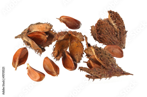 Beechnuts and husks on a plain white background. Wallpaper Mural