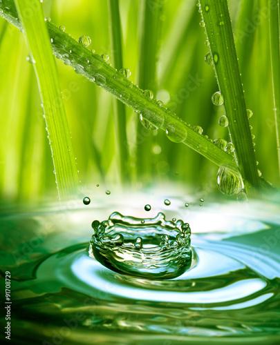 swieza-trawa-z-kroplami-wody
